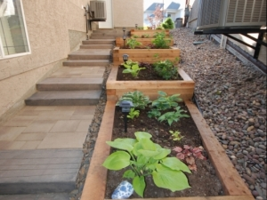 """In order to add some """"colour"""" and """"life"""" to the side of this walkout lot in Hodgson, we constructed a """"Cedar Tiered Planter"""""""