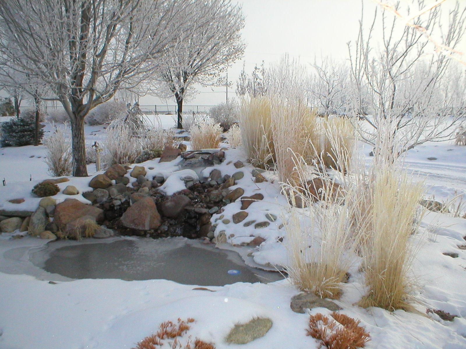 When is the Best Time to Cut Back Ornamental Grasses?