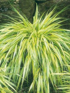 Warm Season Ornamental Grasses